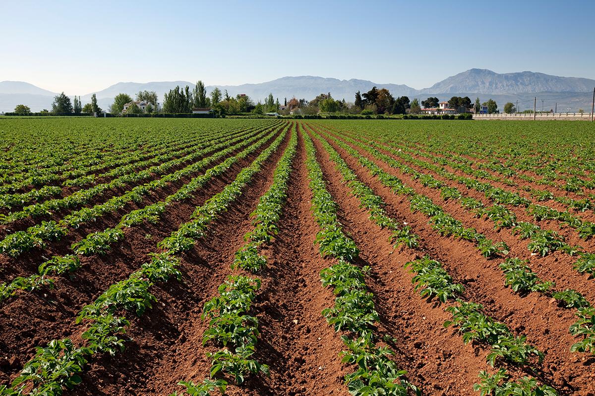 Dirección de Empresas Agroalimentarias
